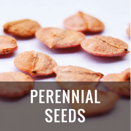 pere seeds