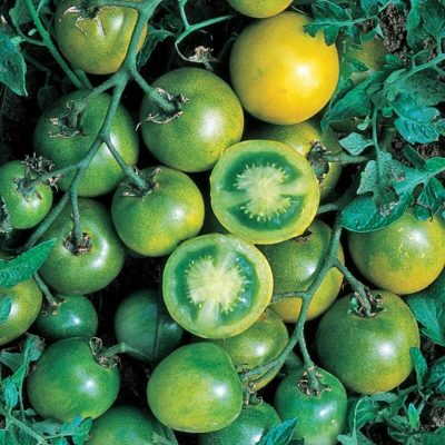Picture of Green Grape Tomatoes