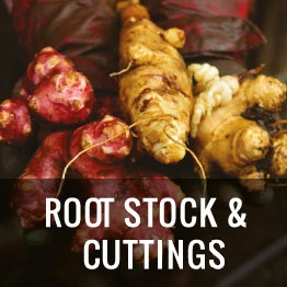 root seeds2