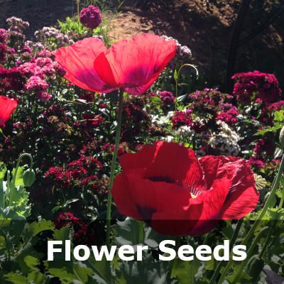 Flower Category