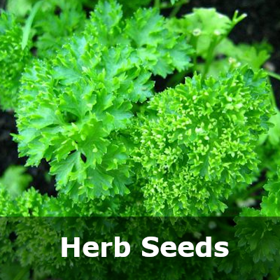 Herb Category