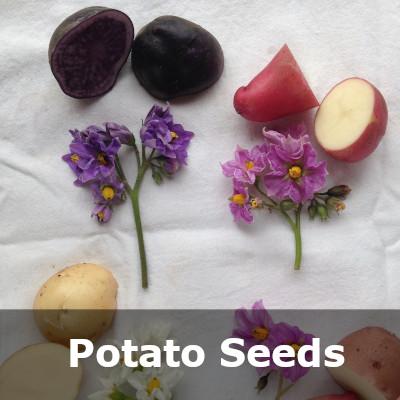 Potato Category